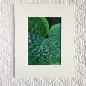 """Hosta Leaf"" 5x7 Photography Print"